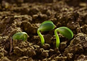encuentro-nacional-agroecologia